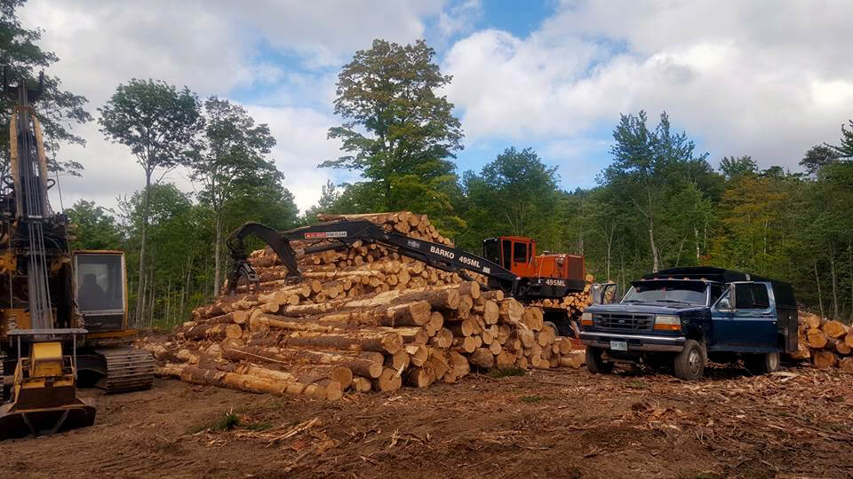 new hampshire logging